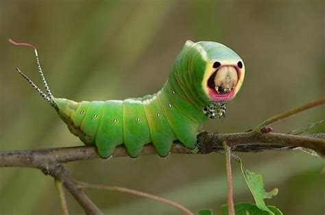 10 Insects That Look Like Aliens   Bit Rebels
