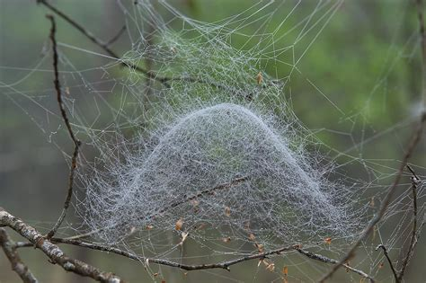 Spider web - search in pictures